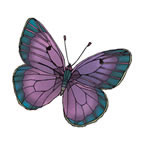 Natural Butterfly 4